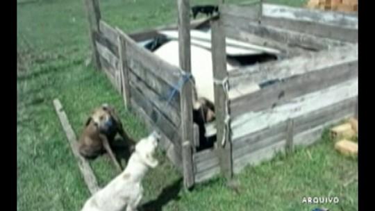 Prefeito é condenado a 20 anos de prisão no PA por ordenar morte de 400 cachorros de rua