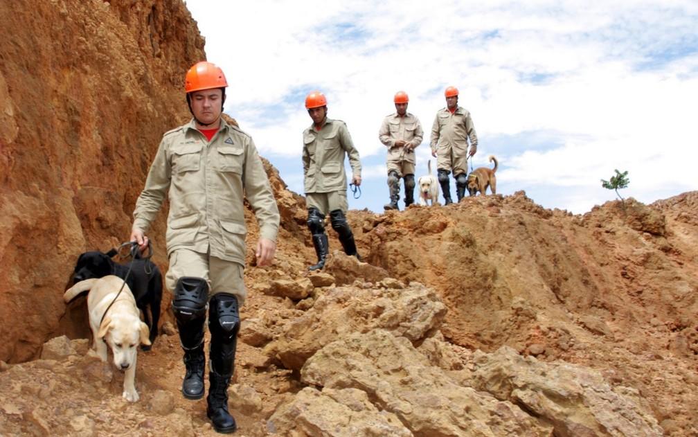 Bombeiros e cães de Goiás em sessão de fotos antes de serem enviados a Brumadinho (MG) para ajudar em buscas de vítimas de desastre  — Foto: Divulgação/Corpo de Bombeiros