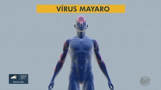 Estudo aponta circulação do vírus mayaro no interior de São Paulo