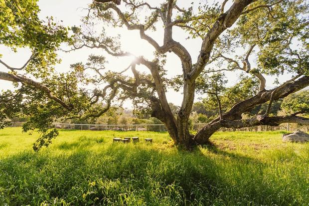 Ellen DeGeneres reduz preço de fazenda em quase R$ 4 milhões (Foto: Divulgação)