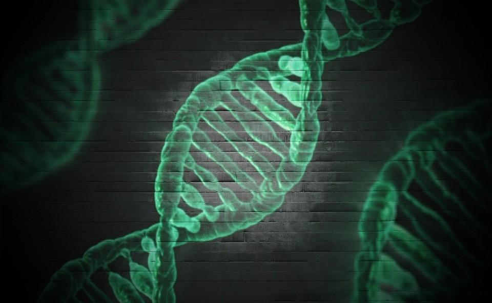 genoma-gene-dna-tecnologia-pesquisa-genica-genetico (Foto: Pixabay/Typographyimages/Creative Commons)