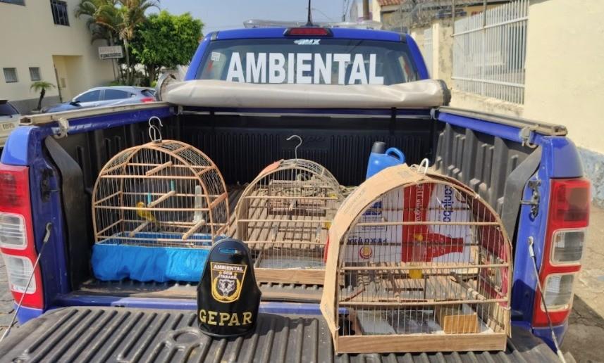 Guarda Municipal resgata aves silvestres mantidas em cativeiro em Itararé
