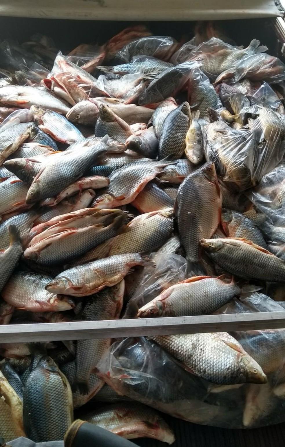 Pescados estavam na carroceria de uma caminhonete abordada em Presidente Epitácio (Foto: Polícia Militar/Cedida)