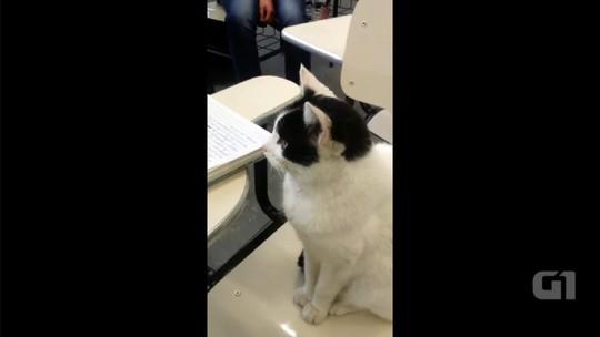 Gato toma conta de carteira de estudante e 'assiste' a aula em faculdade de Salto