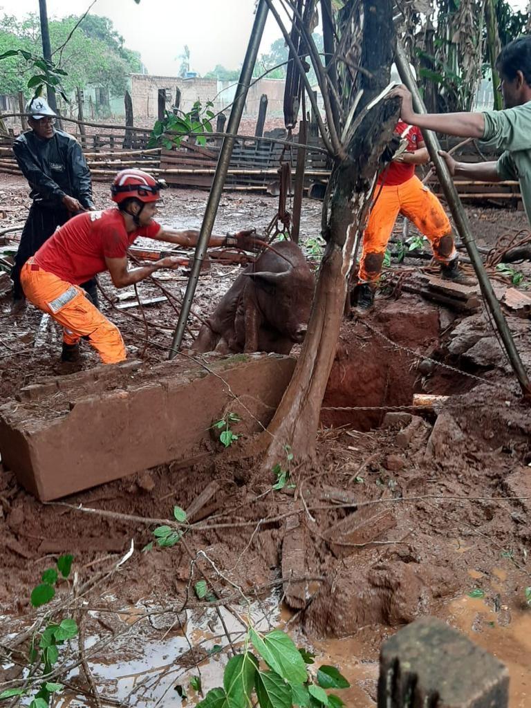 Bombeiros resgatam porca e filhotes de dentro de cisterna em Patos de Minas