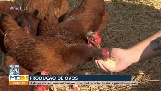 Produtor rural aposta na produção de ovos caipira em Simão Pereira