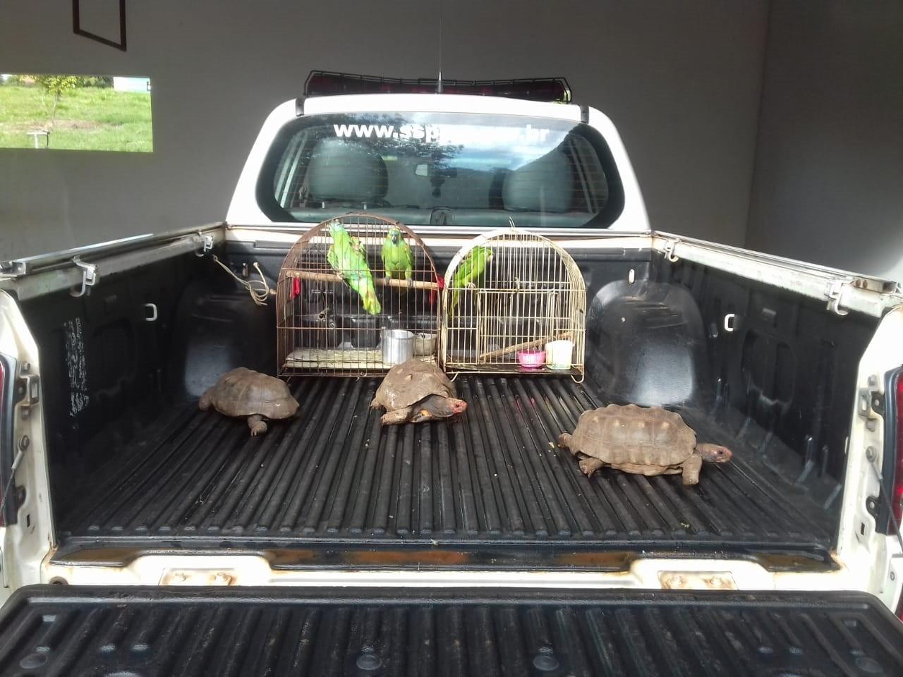 Moradora de Panorama leva multa de R$ 3,5 mil por manter aves silvestres e jabutis irregularmente em cativeiro