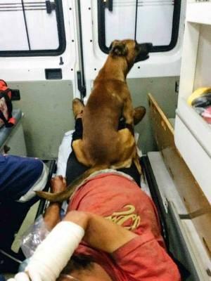 Cachorro acompanhou morador de rua dentro de ambulância (Foto: Reprodução Facebook/Alpa)