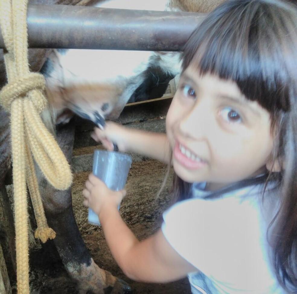 Carolina ajuda o pai no sítio; inclusive a tirar o leite das vacas na propriedade em Bauru (Foto: Arquivo pessoal )