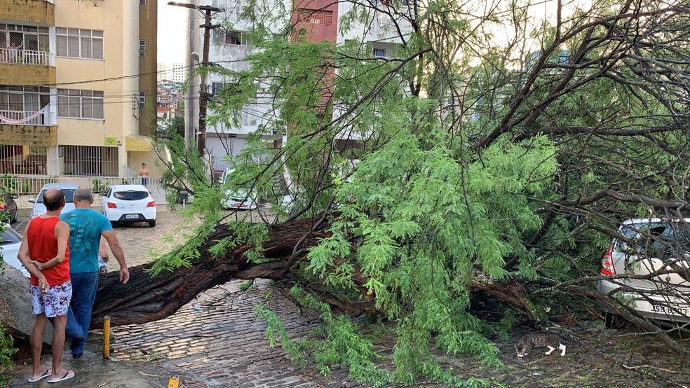 Árvore cai e toma parte de rua no bairro do Acupe de Brotas — Foto: Victor Silveira/TV Bahia