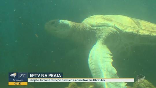 EPTV NA PRAIA: Projeto Tamar é atração turística e educativa em Ubatuba (SP)