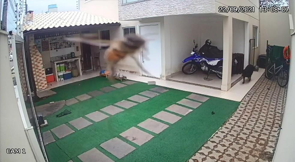 Cães morrem após ataque de abelhas no ES  — Foto: Reprodução/ Videomonitoramento
