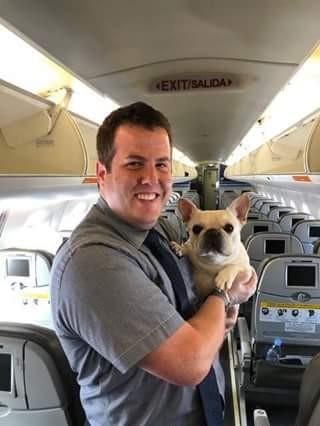 Comissários de bordo salvam cachorra que não estava respirando durante voo (Foto: Reprodução / Facebook)