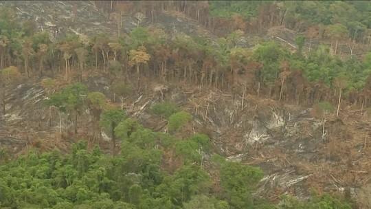 Brasil é destaque negativo em relatório da ONG de meio ambiente WWF