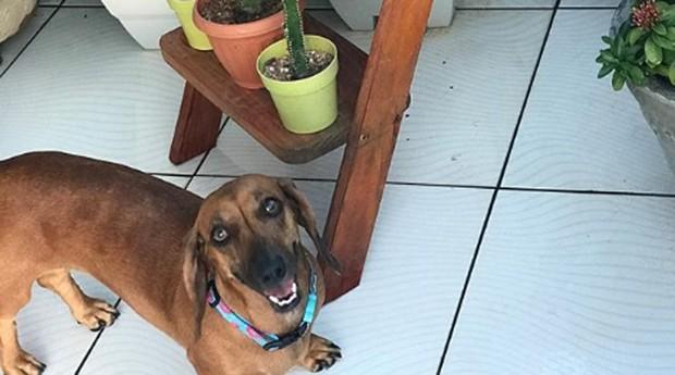 Dalyla também fotografa seus pets (Foto: Reprodução/instagram/lardenos4)