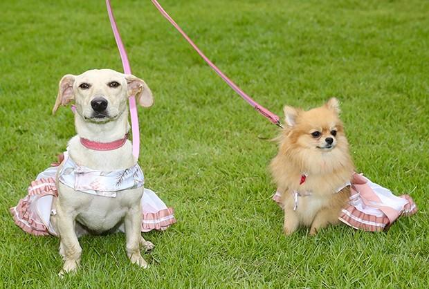 Cachorros dos noivos (Foto: Manuela Scarpa/Brazil News)