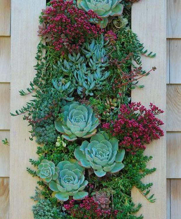 9-ideias-de-decoracao-com-plantas-para-o-dia-das-maes-quadro-com-suculentas.jpg (Foto: Pinterest/Reprodução)