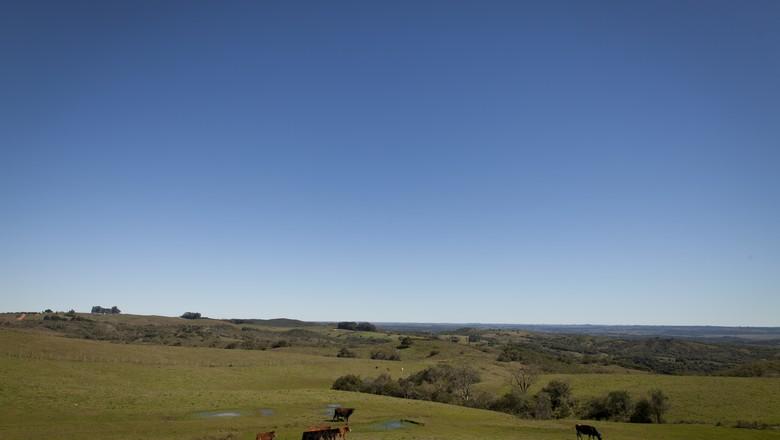 O bioma Pampa ocupa mais da metade do território do Estado (Foto: Marcelo Curia)