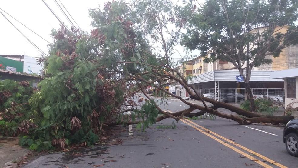 Uma árvore tombou na Rua Jean Émile Favre, no bairro do Ipsep, na Zona Sul do Recife — Foto: Reprodução/WhatsApp