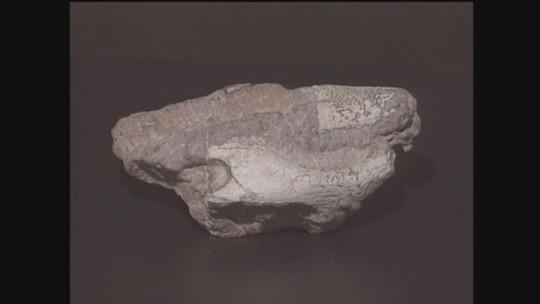 Diversidade de fósseis indica Monte Alto, SP, como refúgio dos crocodilos há 66 milhões de anos