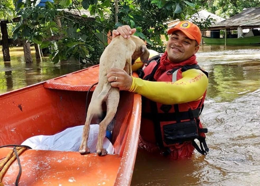 Cachorros resgatados em Amajarí — Foto: Bombeiros/Defesa Civil/Divulgação