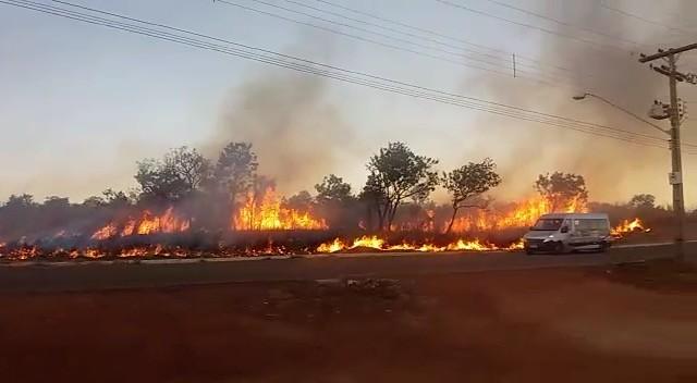 Incêndio atinge área nativa e fumaça toma conta de avenida; vídeo - Notícias - Plantão Diário