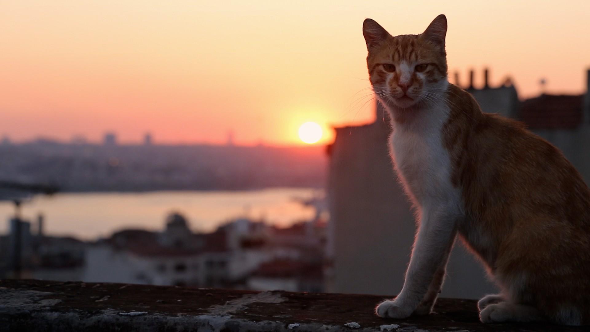 Documentários mostra a vida dos gatos de Istambul (Foto: Divulgação)