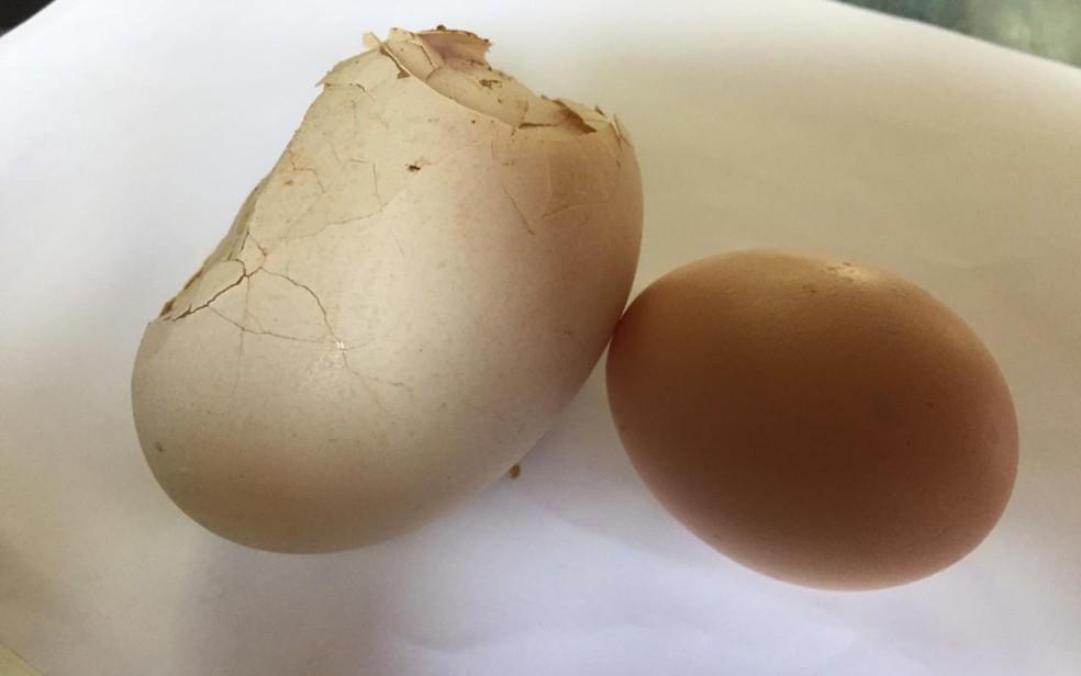 Ovo que estava dentro de outro ovo posto por galinha em Goiânia — Foto: Reprodução/Arquivo pessoal