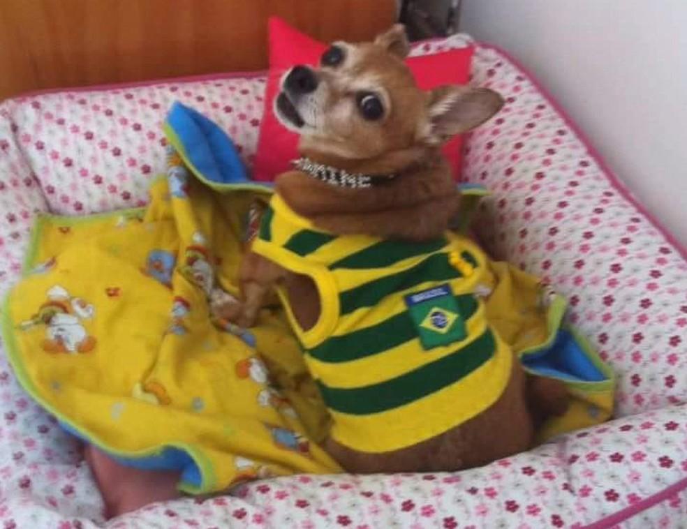 Cadelinha Amine vestida com roupa do Brasil (Foto: Arquivo pessoal)