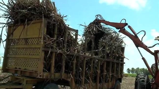 Exportações de açúcar de Alagoas caem, diz Ministério do Comércio Exterior - Radio Evangelho Gospel