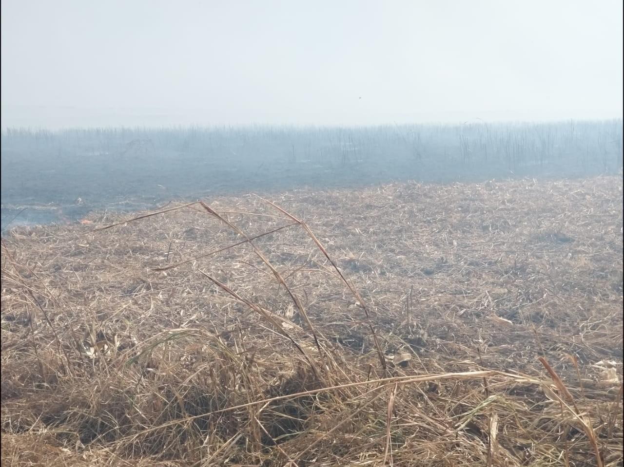 Risco de incêndios durante a colheita devido à estiagem coloca produtores em alerta em MT