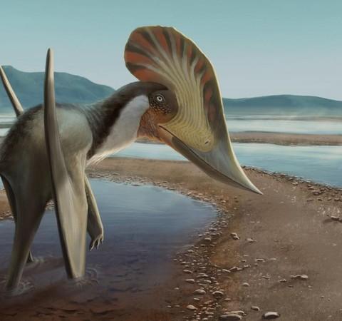 Nova espécie de pterossauro descoberta no Nordeste exibe crista gigante