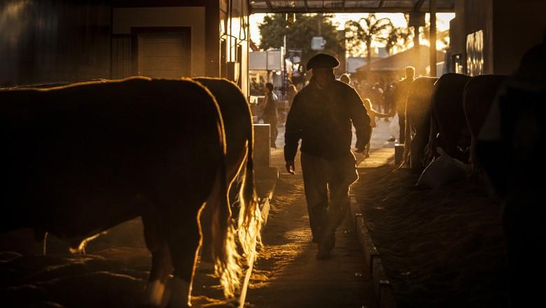Esteio - Rio Grande do Sul - Brasil. Expointer 2018. De 25/8 a 2/9.Fotos © Marcelo Curia (Foto: Marcelo Curia/Ed. Globo)