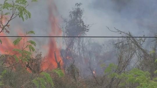 Pantanal teve 334% mais focos de queimadas em 2019