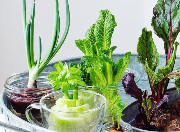 Para ter uma mini horta em casa, uma dica é replantar talos e raízes de vegetais (Foto: Reprodução/Pinterest)