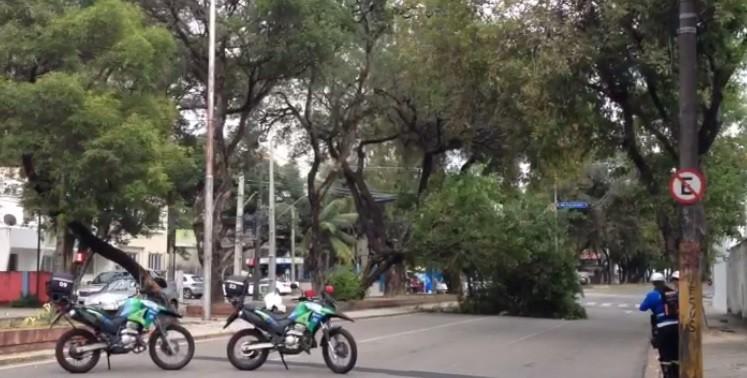 Queda de árvore na área central do Recife provoca interdição de rua