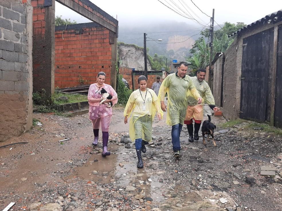 Equipes resgatam cães e gatos que perderam tutores em deslizamentos em Guarujá, SP — Foto: Divulgação