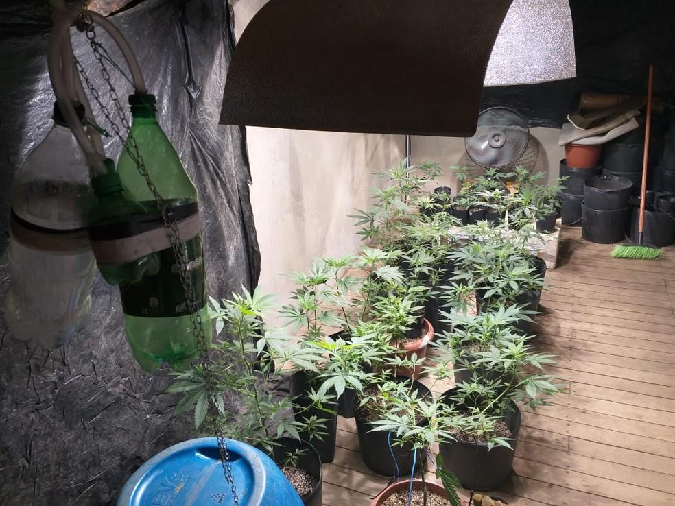 Droga foi achada em casa de Porto Belo — Foto: PM/Divulgação