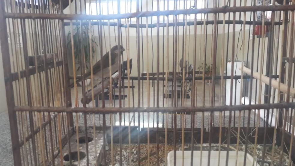 Pássaros silvestres foram encontrados na casa do suspeito em Tietê — Foto: Polícia Militar/Divulgação