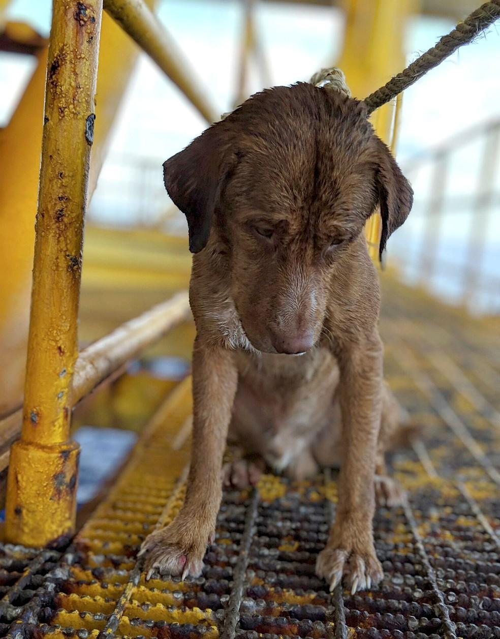 Cão é resgatado no mar a 220 km da costa da Tailândia — Foto: Vitisak Payalaw via AP