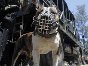 Cães vão ajudar  militares (Foto: GUTO MAIA/BRAZIL PHOTO PRESS/AE)