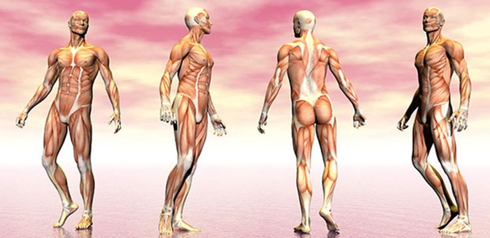 O músculo e suas estruturas — Foto: Shutterstock