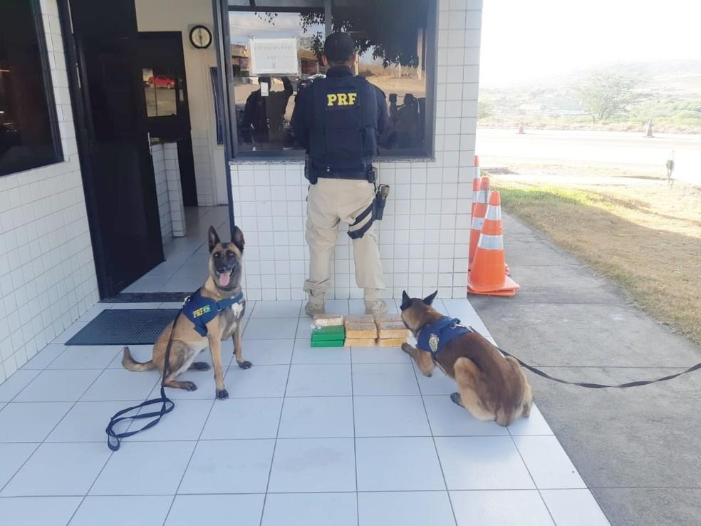 Ação da PRF contou com o apoio dos cães farejadores para localizar a droga — Foto: PRF/Divulgação