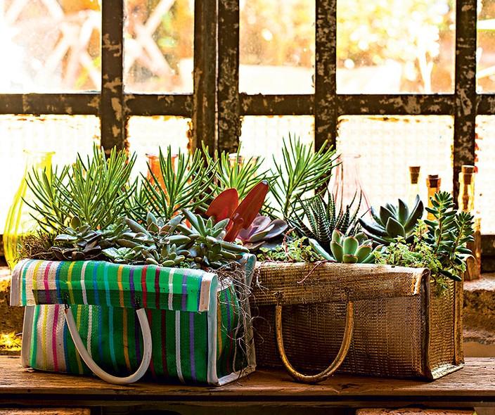 """Claudia Regina, do Ateliê La Calle Florida, adora criar jardins que misturam suculentas e utensílios domésticos, como a sacola. """"Plantei as espécies direto, que, por ser de tecido furadinho, é bem drenável"""", conta"""