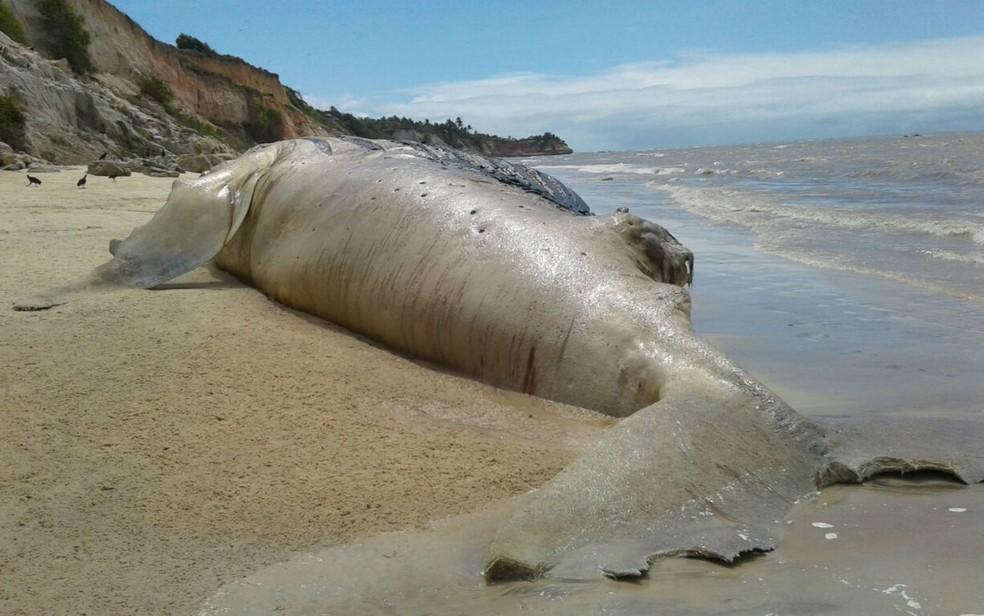 Baleia de 13 metros foi encontrada morta em praia do sul da Bahia (Foto: Kassio Freita/Site Portal Sulbaiano)
