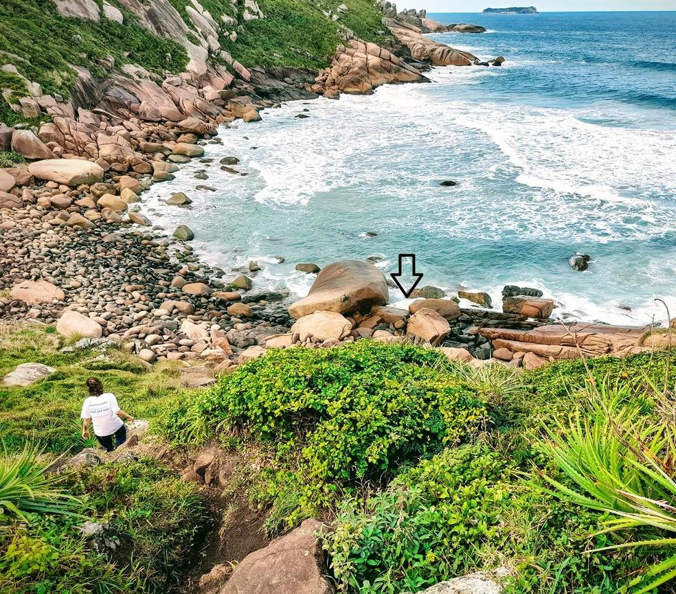 Baleia-jubarte é encontrada morta em praia de Florianópolis — Foto: R3 Animal/Divulgação