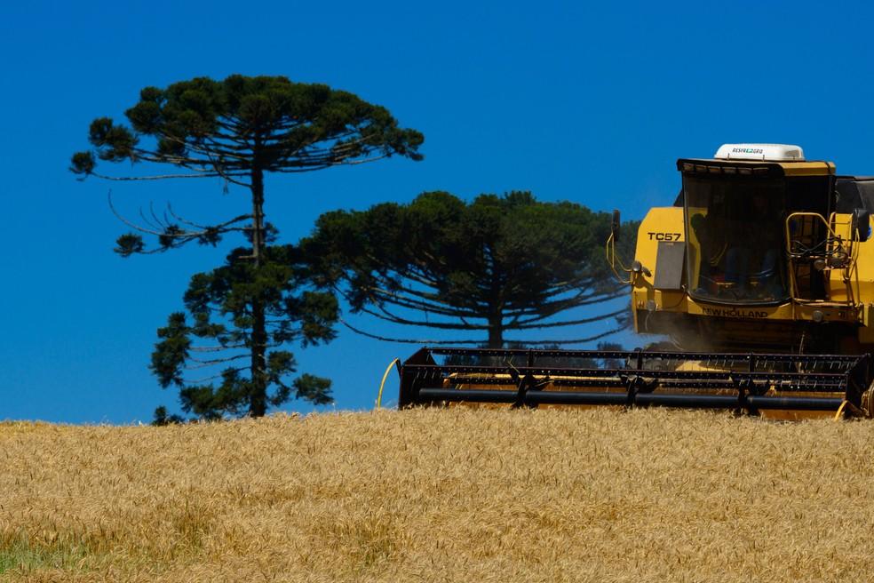 Produção de soja, no Paraná — Foto: Agência Estadual de Notícias/Reprodução