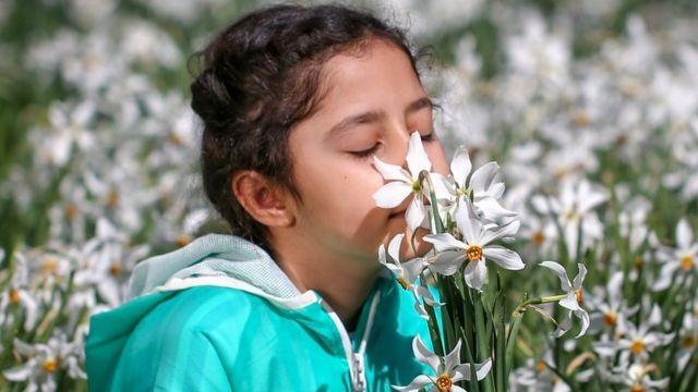 Por que algumas pessoas têm o olfato superpoderoso