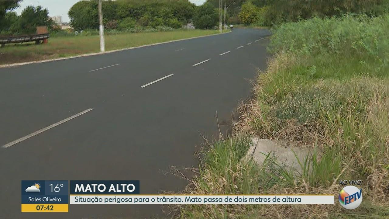 Moradores reclamam do mato alto em avenida de Ribeirão Preto, SP