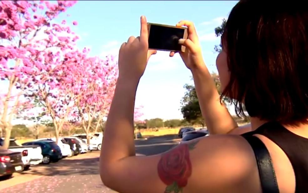 Moradores se encantam com florada de Ipês em Goiás (Foto: Reprodução/TV Globo)